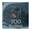 ZOO Koice